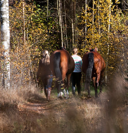 equine visions paarden natuur paardvriendelijke huisvesting