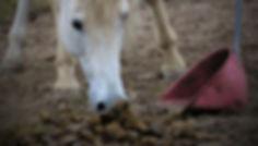 equine visions paarden paddock paradise paardvriendelijke huisvesting mest