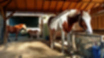 equine visions paarden stal paardvriendelijke huisvesting