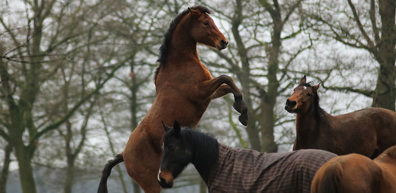 paarden pension buitenkans paddock paradise paardvriendelijke huisvesting