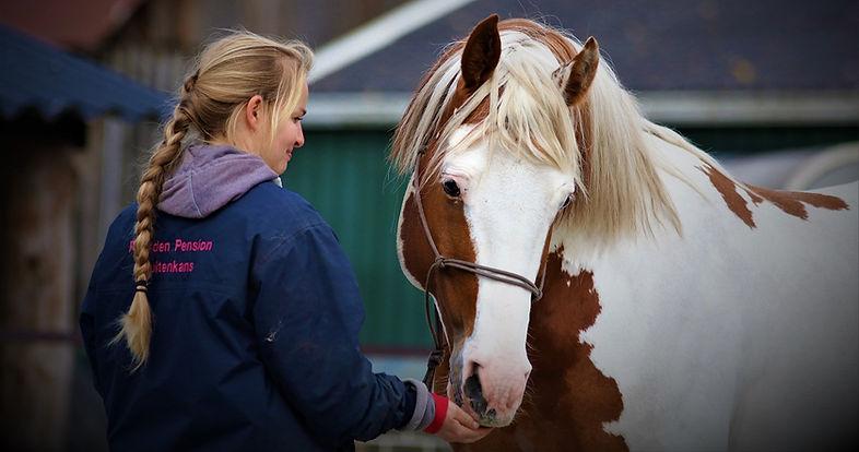 marianne van dijk hengst socialisatie paardvriendelijke huisvesting
