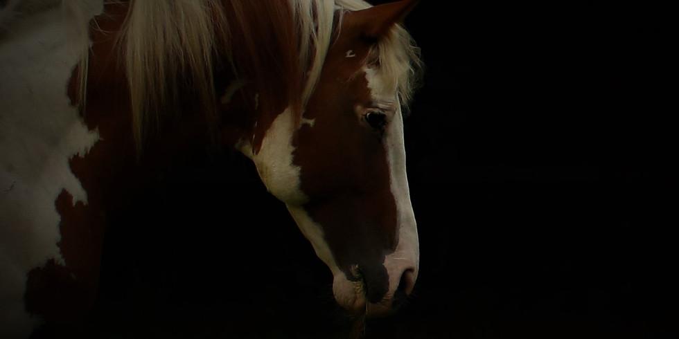 Stress Signalen bij Paarden