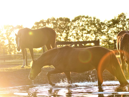 Het lief en leed dat (van) Paardenhouden heet