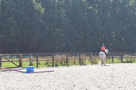 paddock paradise equine visions paarden paardvriendelijke huisvesting
