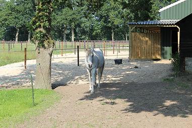 paarden socialisatie paddock paradise paardvriendelijke huisvesting