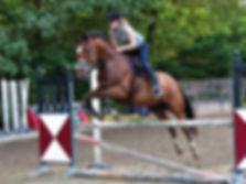 marianne van dijk paddock paradise paardvriendelijke huisvesting