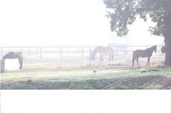 Paarden Pension Buitenkans