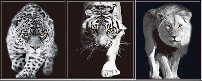 3D Flip Black _ White Cats3D lenticular