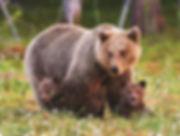 942 - Bear Family.jpg