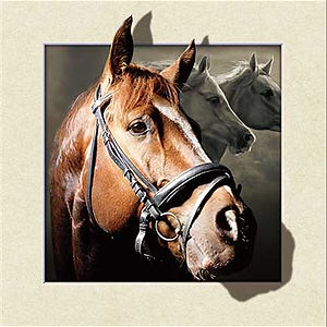 5D Horse 3D lenticular poster wall art d