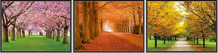 933 - Path Seasons.jpg