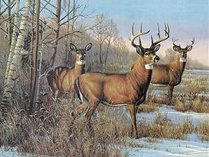 924 - Three Deer.jpg
