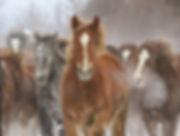 962 - Charging Horse (1).jpg
