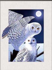 5Ds Owls 3D lenticular poster wall art d