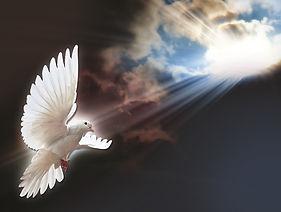 964 - White Dove.jpg