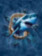 Copy of 938 - Shark.jpg