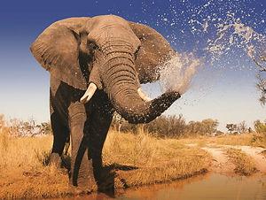 948 - Elephant-w800-h600.jpg