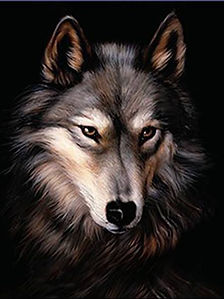 922 - Wolf Portrait (Touch the Nose).jpg