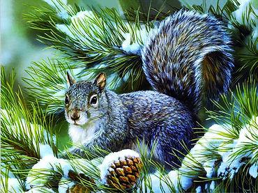 Squirrel 3D lenticular poster wall art d