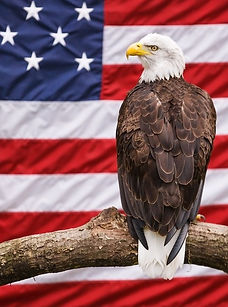 American Eagle 3D lenticular poster wall