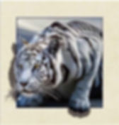 5D Tiger 3D lenticular poster wall art d