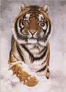 920 Tiger.png