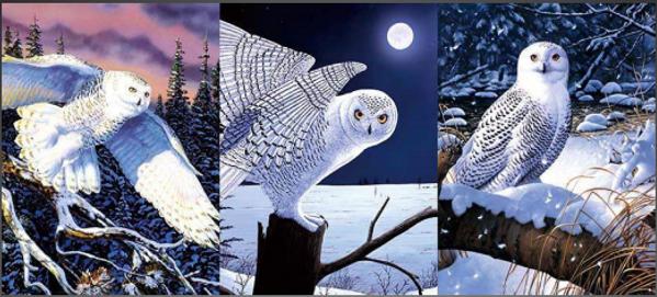 3D Flip Owls Changing 3D lenticular post