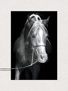 5Ds Horse 3D lenticular poster wall art