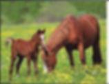 3D Flip Horses 3D lenticular poster wall