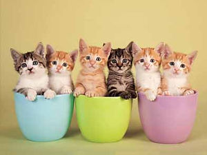 Kittens in Cups 3D lenticular poster wal
