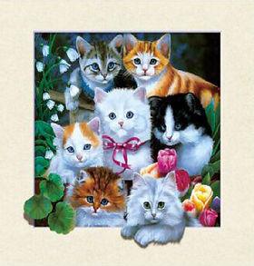 5D Kittens 3D lenticular poster wall art