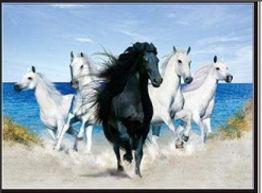 3D Flip Horse on Beach 3D lenticular pos
