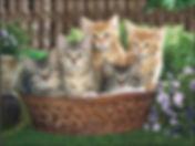 Kittens in Basket 3D lenticular poster w