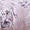 Thumbnail: Modis F-10982 2.0