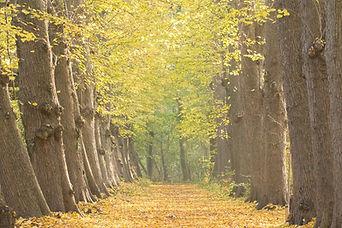 Natuurgebied Midwolderbos