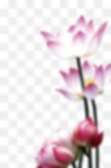 1542570115255blob_edited.jpg