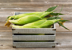 Vintage Wooden Crate Filled With Fresh Corn In Stalks On Wooden Boards._edited