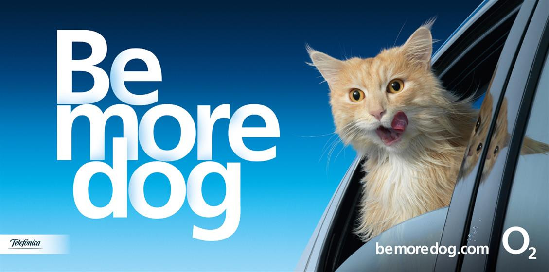 Be More Dog - Car