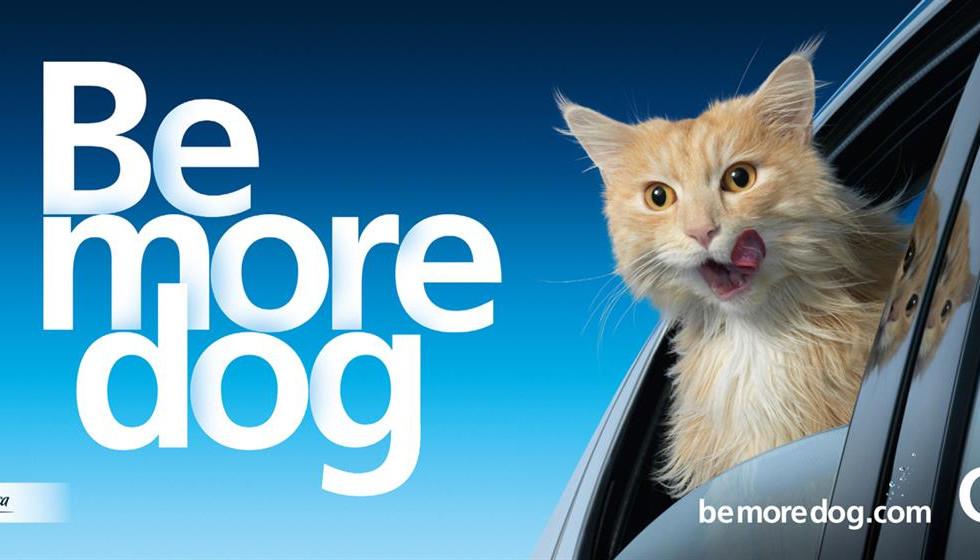 Be More Dog - Car