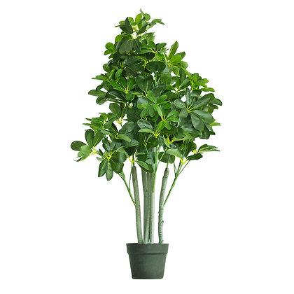 Umbrella Plant 95cm
