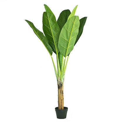 Banana Tree 140cm