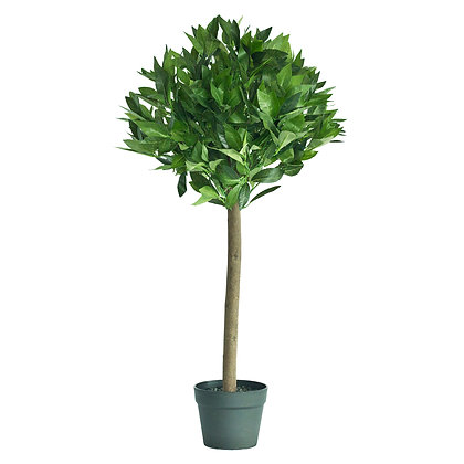 Topiary Bay Tree 90cm