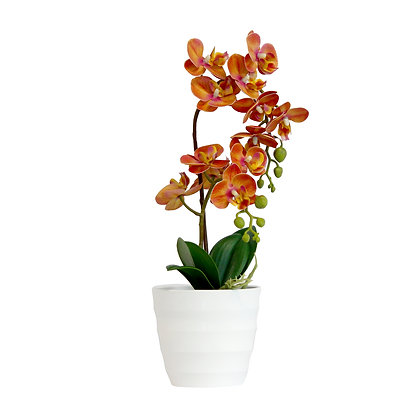 Orchid 40cm - Orange