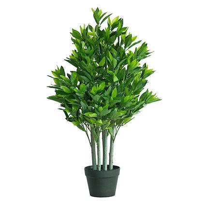 Bay Tree 90cm