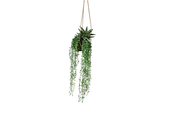 Kokedama Succulents & Pearls on Moss Hanging Plants 25cm
