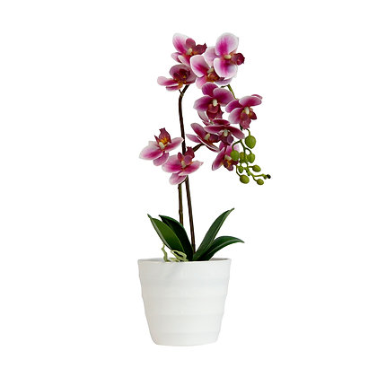 Orchid 40cm - Pink and White
