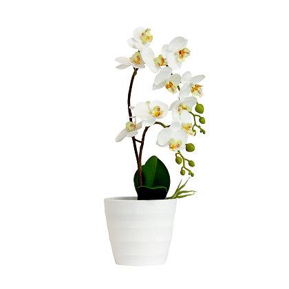 Orchid 40cm - White