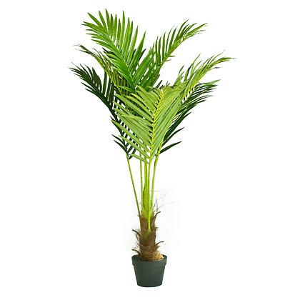 Phoenix Palm Tree 130cm