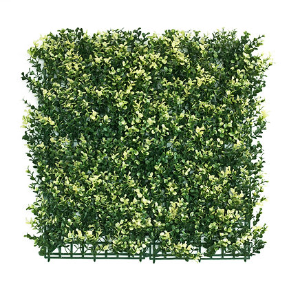 Variegated White English Box 50x50cm Artificial Hedge Tile