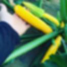 スクリーンショット 2019-11-07 16.56.06.png